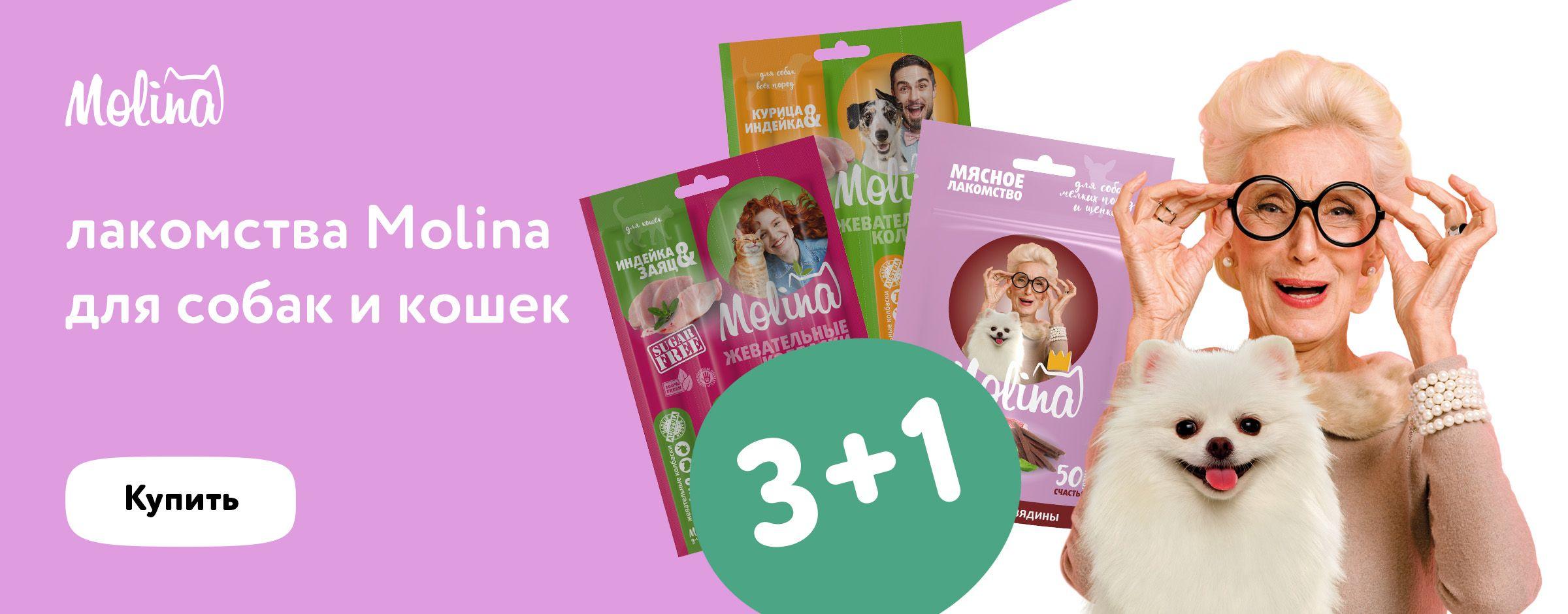 Molina 3+1